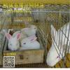 兔子產箱,母兔塑料產箱,兔崽子箱子