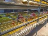 自动化养鸡水线料线   全自动化养鸭设备