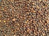 茶籽 信陽毛尖茶籽 信陽毛尖種子 山茶籽