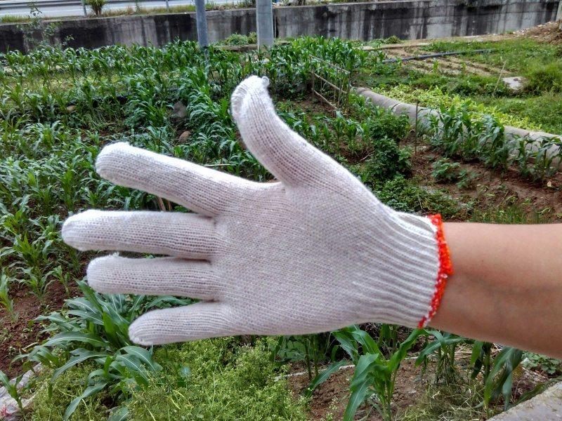 普通线手套