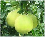 柚皮甙二氫査爾酮,柚子皮提取物