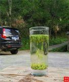 婺源峽谷春牙聖綠茶