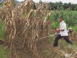 供应玉米 小麦割草机 多用途割草机