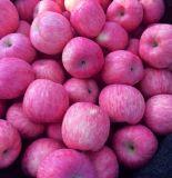 紅富士蘋果