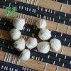 辣木籽種子批發多少錢一斤,雲南國禮辣木籽種子比印度辣木籽好嗎