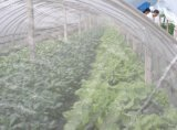 现货供应攀枝花卓通果园蔬菜防虫网