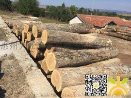 尚高木业供应白橡原木 产地保加利亚