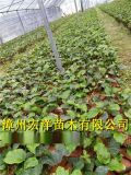 福建黄金百香果苗基地 种植黄金百香果亩产量高吗