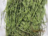 最专业的脱水贡菜  优质苔干