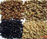 啤酒用大麦芽,澳麦芽,国产麦芽,焦香麦芽