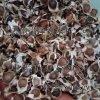 印度辣木籽怎么吃减肥,吃辣木籽想吐,吃辣木籽呕心,吃辣木籽拉肚子