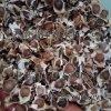 印度辣木籽怎麼吃減肥,吃辣木籽想吐,吃辣木籽嘔心,吃辣木籽拉肚子