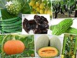 果蔬酵素15000活性单位