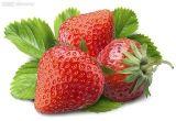 红颜草莓苗25厘米高种苗