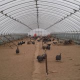 鲜花种植大棚 蔬菜大棚管温室大棚骨架