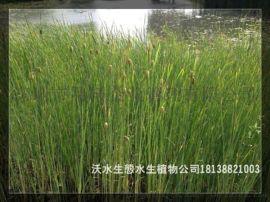 广东那里有水生植物大全