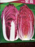 紫白菜种子韩国三系杂交品种
