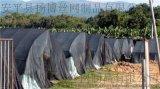 遮陽網,防曬網,黑色遮陽網,農業大棚遮陽網,農業防曬防塵網