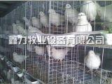 河北養殖場鴿子籠供應商