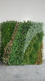 宁波妍景绿化墙,酒店装饰,餐厅背景墙