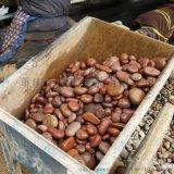 【3-5公分红色鹅卵石】_红色鹅卵石厂家价格!