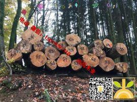 尚高木业供应旋切级法国榉木长期合作的老客户