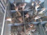 供应广东广州哪里有非洲鸵鸟出售?