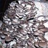 供应优质 石膏粉 透明石膏粉 工业硫酸钙拉发剂主料蘑菇大棚肥料