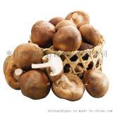 食用菌专用石膏粉,蘑菇种植培养基料石膏,平菇用生石膏
