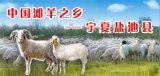 北京宁夏盐池滩羊销售