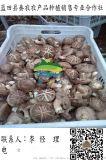 批发干香菇 销售香菇菌种 香菇种植技术 蓝田秦农合作社