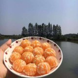 大自然的饋贈——三袁故裏公安高山小橘