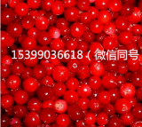 杞动能量-速冻红豆-10kg装-品质保证