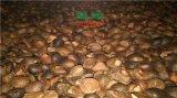 连州环保能耗小的山茶籽烘干设备