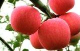 陝西正宗洛川冷庫紅富士蘋果80以上價格