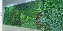 宁波绿植墙 宁波绿化墙 浙江植物墙 上海植物墙 江苏植物墙