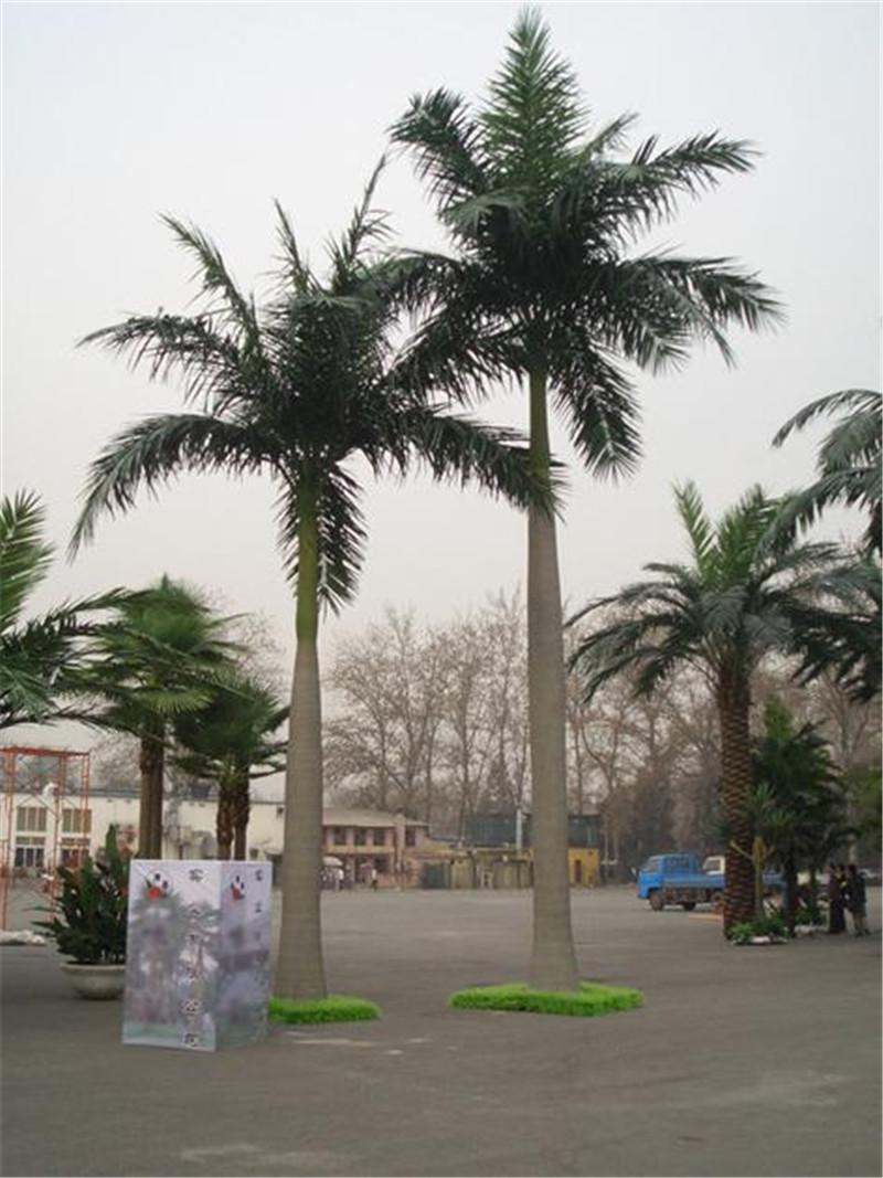 大王椰仿真椰子树仿真植物   欢迎致电询问:蒋女士    (手机和微信)