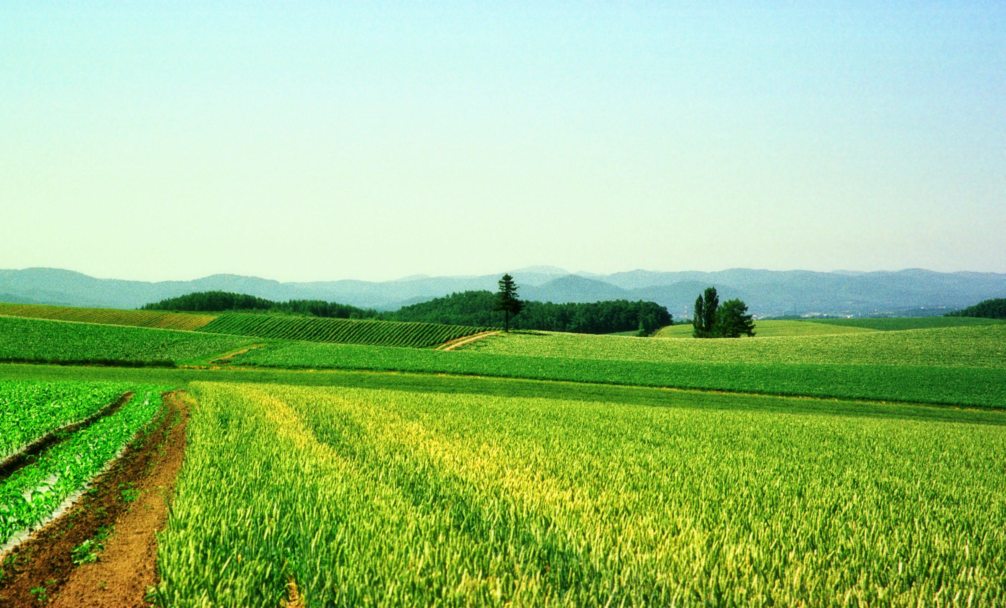 金荞麦提取物 中文名称:  金荞麦   英文名称:  Rhizoma Fagopyri Dibotryis(拉);golden buckwheat rhizome    定义:  蓼科植物金荞麦 Fagopyrum dibotrys(D.Don)Hara 的干燥根茎。   金荞麦为蓼科植物,别名苦荞麦、野桥荞麦、天荞麦。其性凉,味辛、苦,有清热解毒、活血化瘀、健脾利湿的作用。主产于陕西、江苏、浙江、湖北、湖南等省,华东一带也可栽培