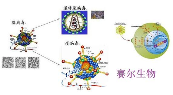 细胞迁移实验服务(划痕实验)