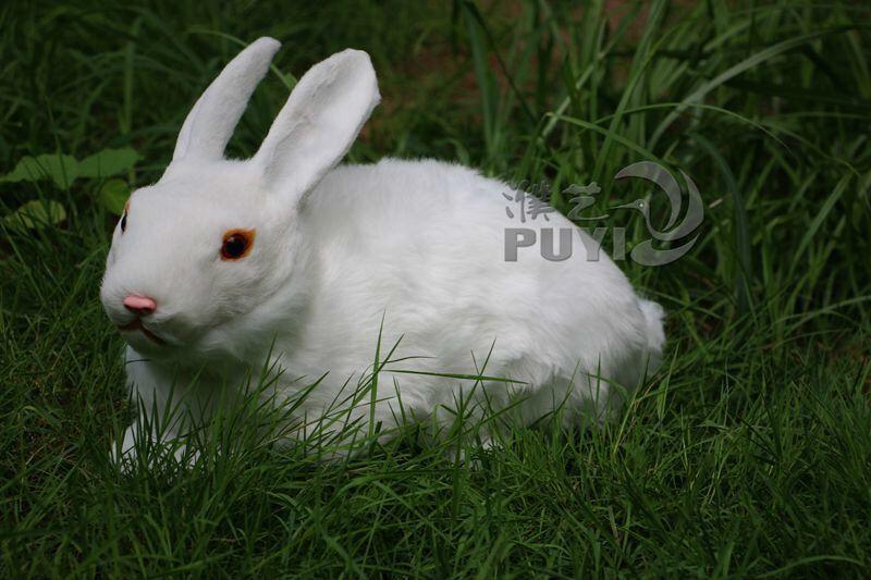 小白兔/大白兔/玉兔/可爱小白兔/兔子摆件/家居饰品