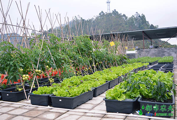 都市农夫屋顶绿化diy设计效果图_别墅空中花园项目工程招商合作
