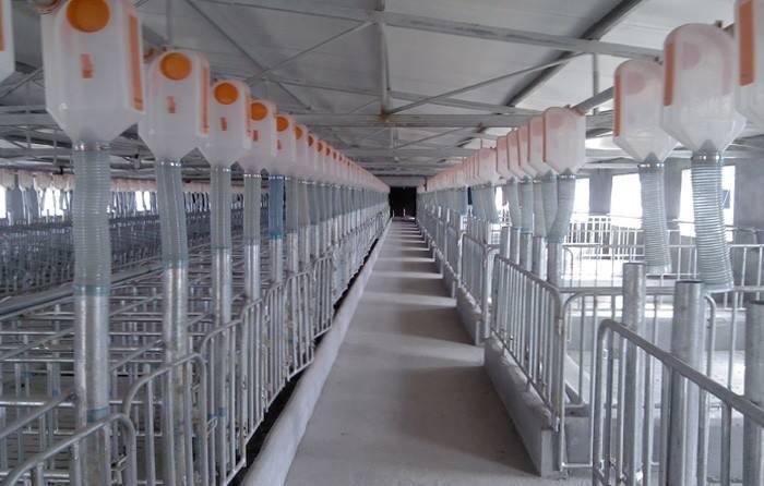 猪场自动供料_> 猪场自动化料线猪用喂料设备生产厂家