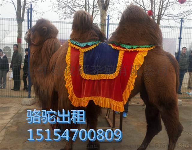 动物出租动物展览动物表演各种动物展览表演租赁价格