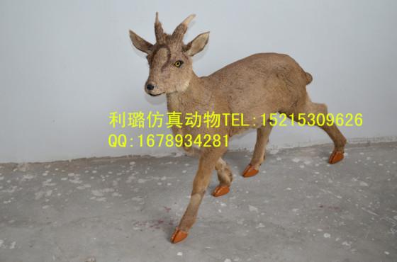 仿真动物模型仿真鹿赤鹿麂子逼真高端动物模型摆件装饰品野生动物模型