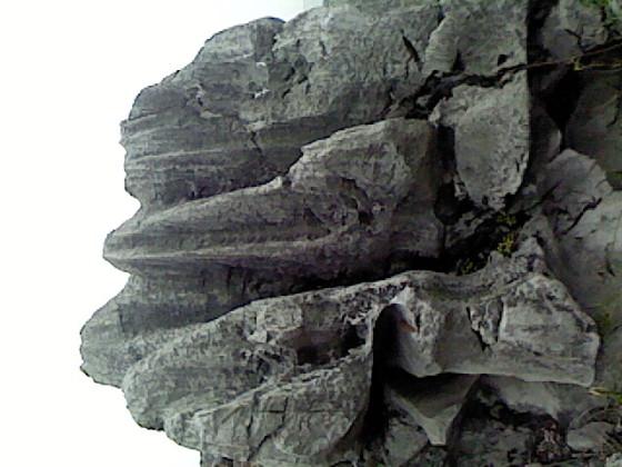 太湖石图片