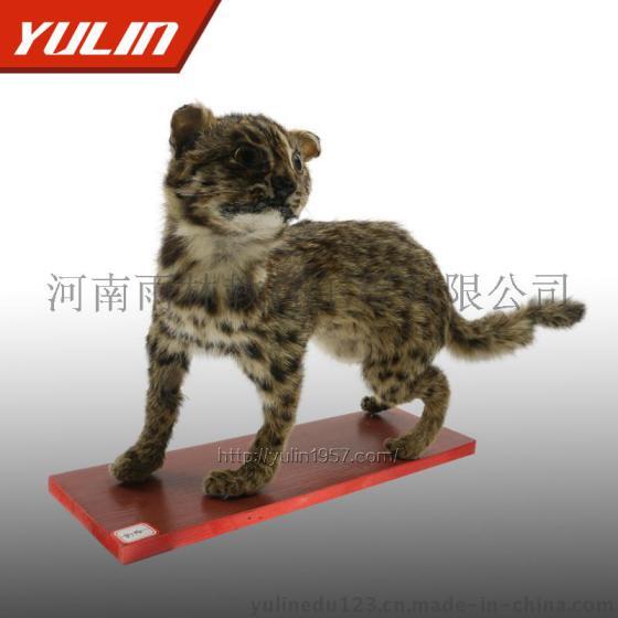 材质:动物皮毛|制作工艺:手工|加工定制:是|动物种类:猫|商标:雨林