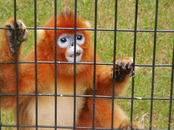 动物园用养殖围栏网价格/动物园勾花网围栏/安平富凯厂家
