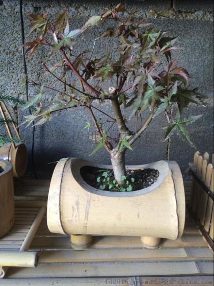 FD-1611213各种款式竹筒花盆,盆栽