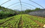 溫室大棚 圓管拱棚  蔬菜大棚 種植大棚