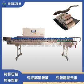 歐亞德鰻魚皮帶式分選機分級秤重量檢測機